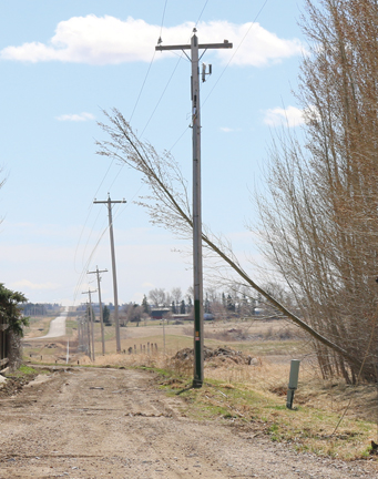 Strong winds caused this tree to tumble onto a power line in Bow Island on Saturday, causing a community-wide power outage.