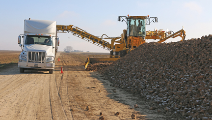 Pictured is one of many truckloads of sugar beets that was unloaded during this year's harvest.