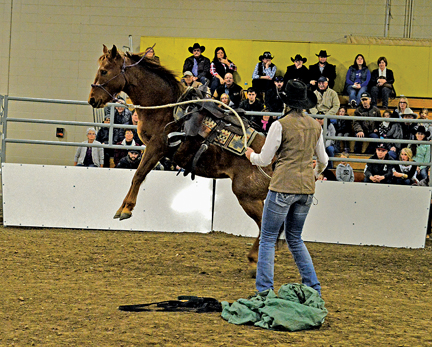 The Christmas Horse Expo and Trade Show went all weekend at the Cypress Centre in Medicine Hat. Pictured: Renee Gareau puts her pony through the paces for a keen and knowledgeable audience on Saturday.