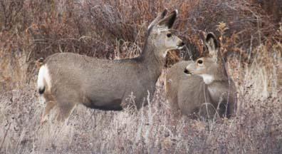 120815Comm-deer