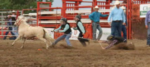Photo by Jamie Rieger-Young cowboys and cowgirls tried their luck in the wild pony races.