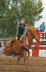 Photo by Jamie Rieger- Local steer rider, William Barrows earned some cash over the weekend, finishing in a three-way tie in the steer riding event.