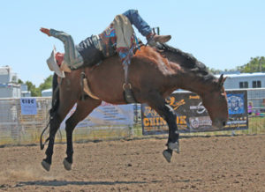 Photo by Jamie Rieger-Calder Peterson scored 66 points and earned a few dollars with this ride in the bareback event.