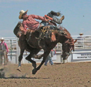 Photo by Jamie Rieger- Australia's Daniel Imsirovic scored 71 points on Cowboy Trail in the novice bareback event.