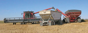Photo by Jamie Rieger- The work was done quickly and efficiently at the Westfield growing project harvest for the Canadian Foodgrains Bank.